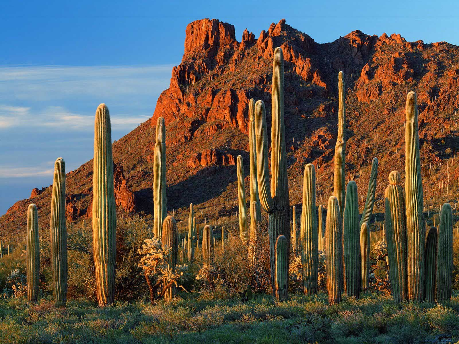 arizona s economy poised for continued growth office of the